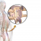 New spinal technologies and devices on the up
