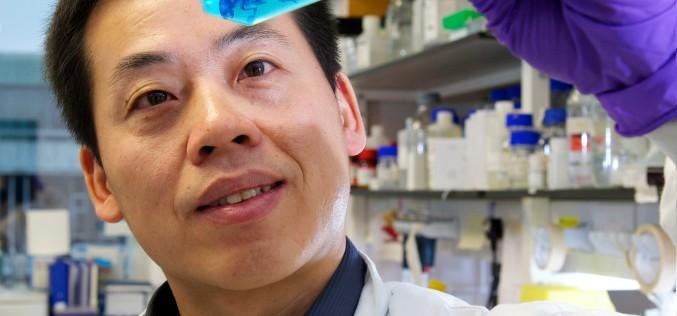 Body clock study unlocks prospect of treatment for osteoarthritis