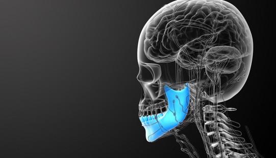 Stem cells from jaw bone help repair damaged cartilage