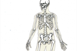17-18 January 2019, Anatomy & Surgical Exposures in Orthopaedics Course; Oswestry