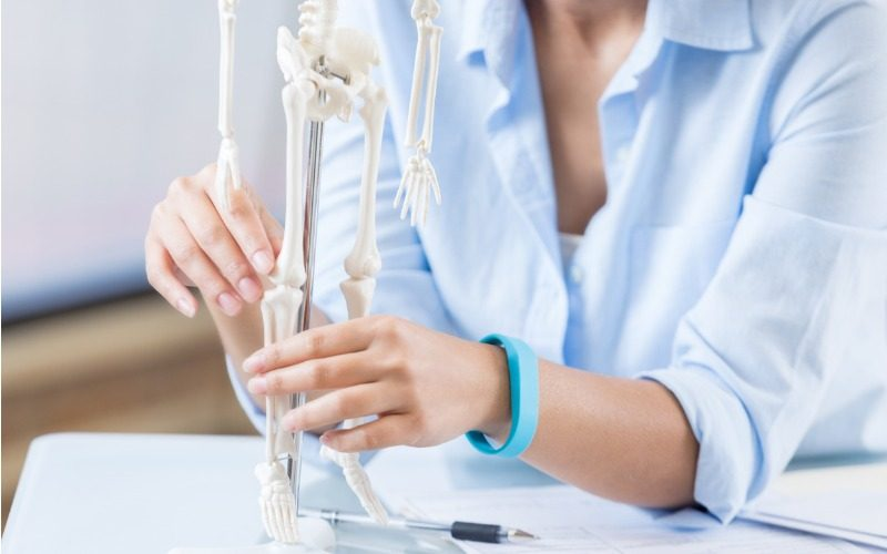 New bone healing mechanism has potential therapeutic applications