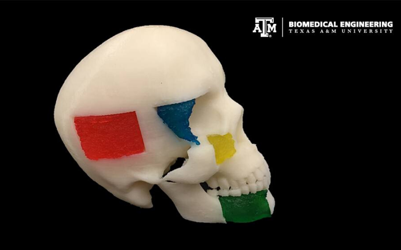 Texas A&M researchers use 3D-printed biomaterials and stem cells to create bone grafts