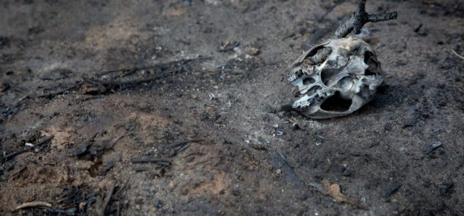 Bringing burnt bones back to 'life' using 3D technology