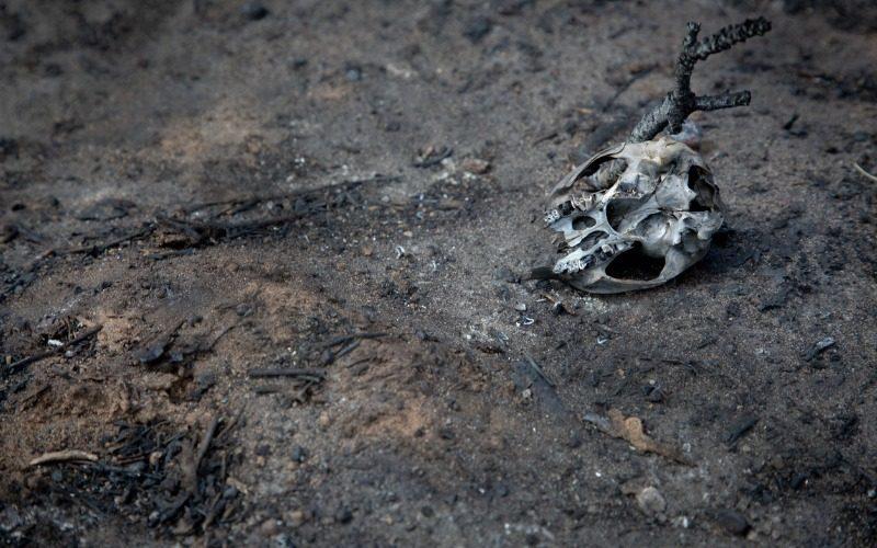 Bringing burnt bones back to 'life' using 3D technology