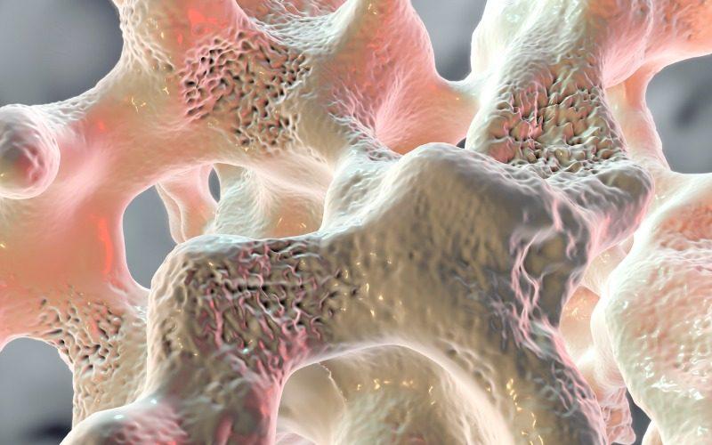3D X-ray techniques reveals secrets from inside bones