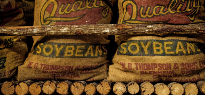 Researchers use soy to improve bone cancer treatment