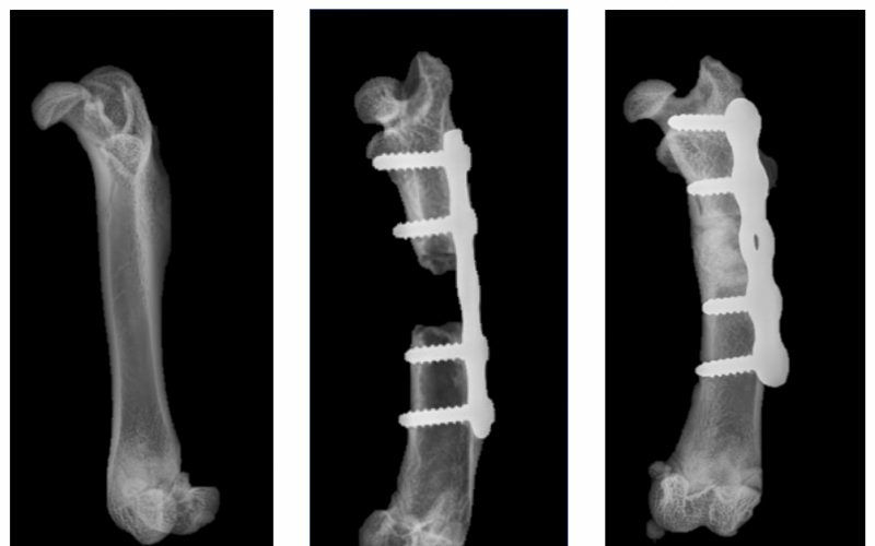 New method heals skeletal injuries with synthetic bone