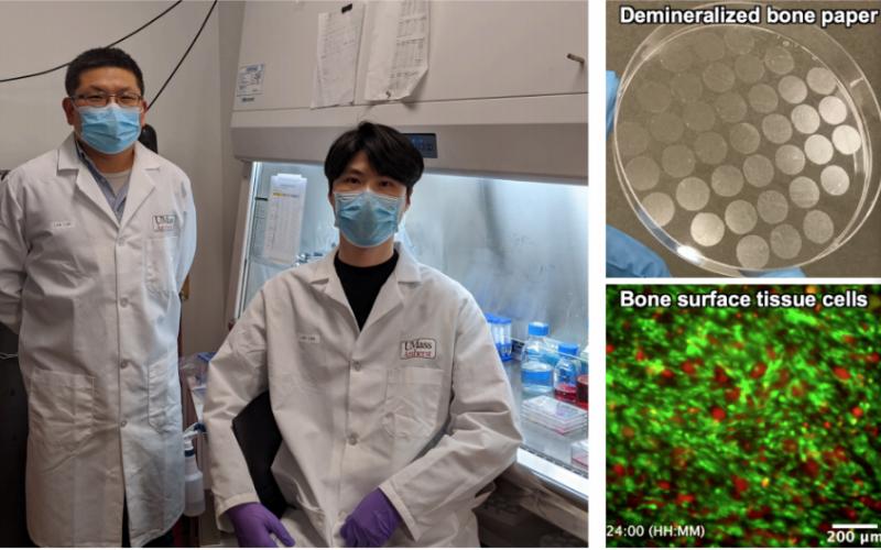 Researchers develop technique to replicate bone-remodelling processes